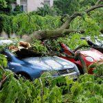 車で走行中に木が倒れて破損した!車両保険で損害を補償する